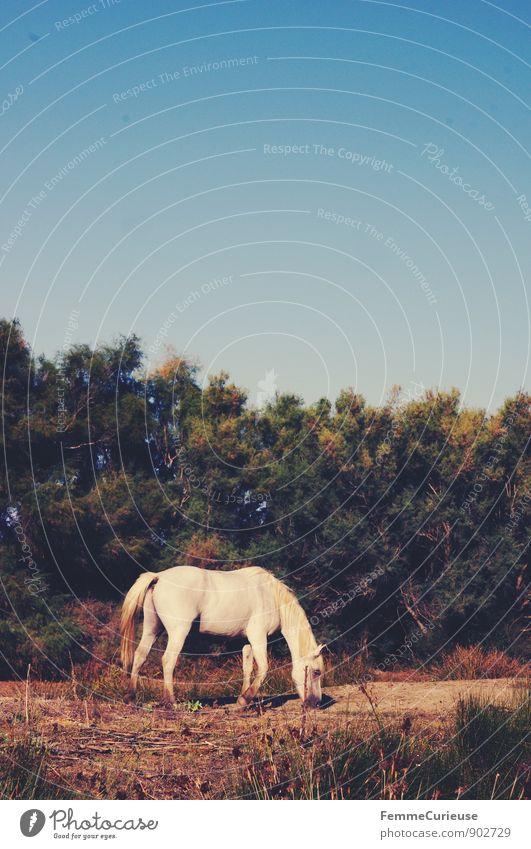LaFrance_08 Natur Ferien & Urlaub & Reisen Pflanze weiß Baum Landschaft Tier Reisefotografie Gras Essen Sand Erde wild Idylle Wildtier Sträucher