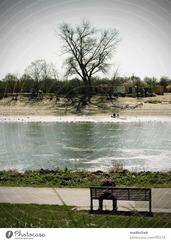 VOM ANDEREN UFER Mensch Mann Natur Baum grün Sommer Blume Strand Ferien & Urlaub & Reisen Erholung Wiese Gras Wege & Pfade Sand Küste Park