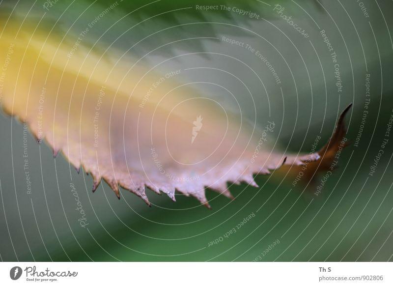 Blatt Natur Pflanze Herbst verblüht ästhetisch authentisch elegant natürlich braun gelb grün Gelassenheit geduldig ruhig Bewegung Farbe schön harmonisch