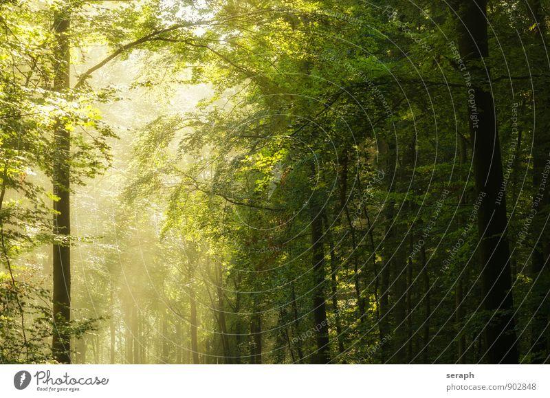 Buchenwald Buchsbaum Baumrinde Ast Baumreihe Forstwirtschaft Märchen romantic Wald Natur Baumkrone Zweig Pflanze Laubbaum Laubwald Blatt Sonnenlicht