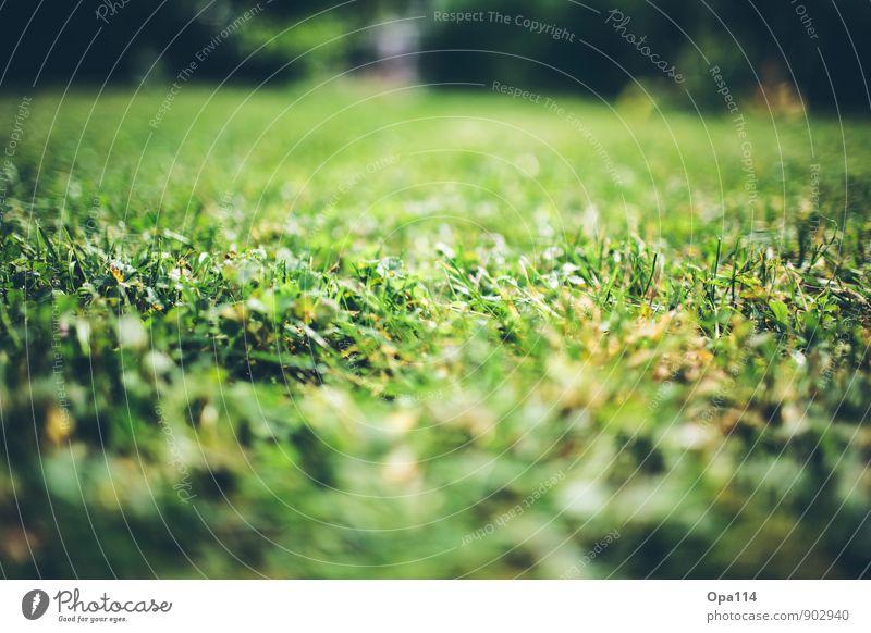 Frisches Grün Umwelt Natur Pflanze Tier Sommer Herbst Wetter Schönes Wetter Gras Sträucher Moos Grünpflanze Nutzpflanze Garten Park Wiese Wachstum weich gelb