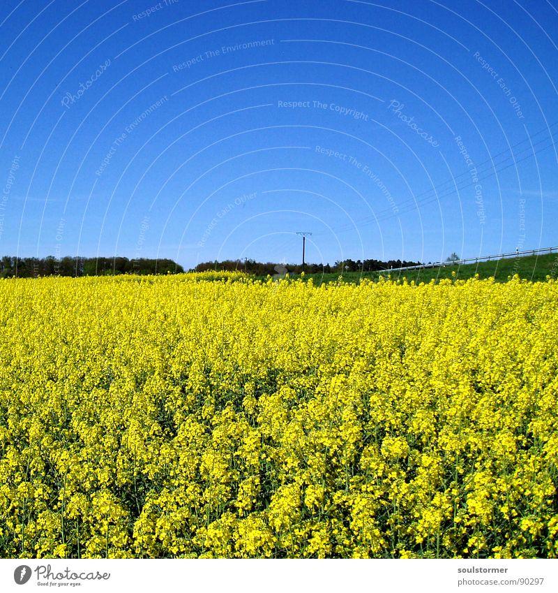 Abseits der Straße... gelb grün Raps Strommast Wiese Wolken Elektrizität Frühling Blüte Blume Feld Rapsfeld Baum Leitplanke Pause Erholung ruhig Landstraße