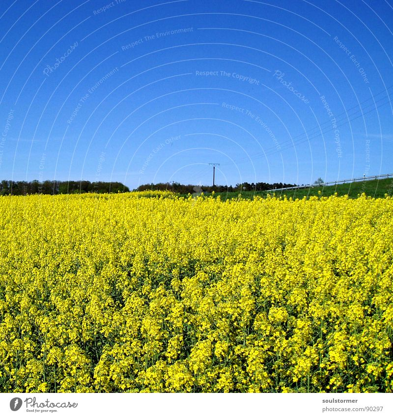 Abseits der Straße... Himmel Baum Blume grün blau ruhig Wolken gelb Straße Erholung Wiese Blüte Frühling Feld Elektrizität Pause