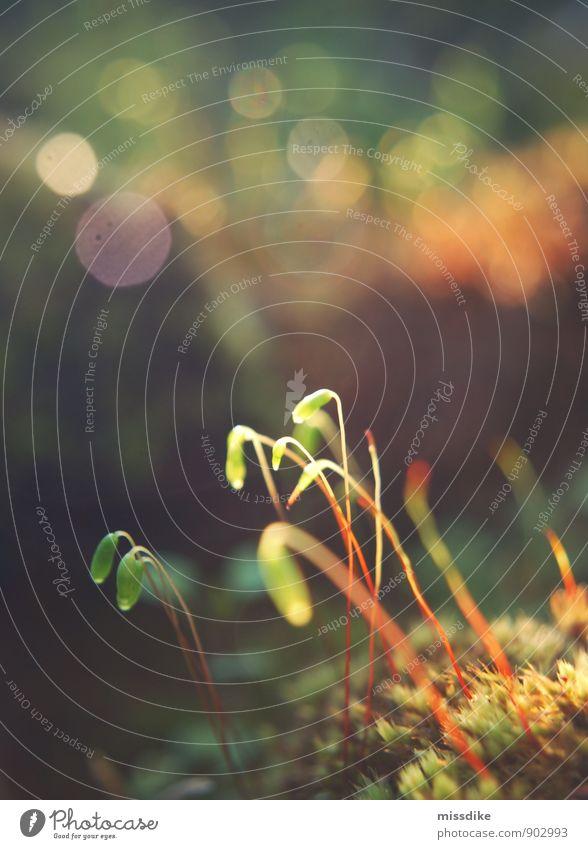 flimmern Natur Pflanze Sommer Sonne Erholung ruhig Wald Umwelt Leben Herbst Gefühle Frühling Gras Garten Stimmung Zufriedenheit
