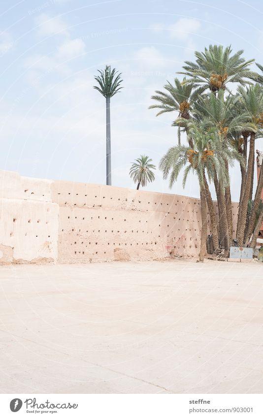 Palme Sand Himmel Schönes Wetter Wärme Baum Marrakesch Marokko Naher und Mittlerer Osten Mauer Wand hell Oase Wüste Ferien & Urlaub & Reisen Farbfoto