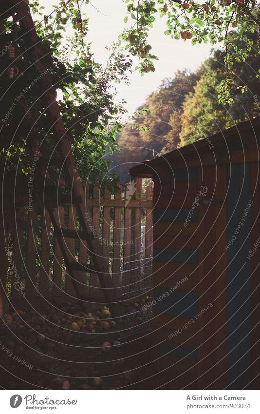 shed corner 2 Natur Herbst Schönes Wetter Baum Garten natürlich herbstlich Leiter Gartenhaus Gartenzaun Gedeckte Farben Außenaufnahme Menschenleer