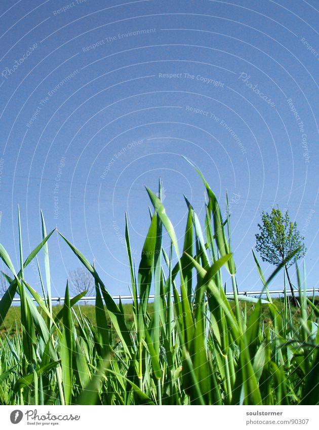 Eine Wunderwelt - neben der Straße... Elektrizität Leitplanke Landstraße Geschwindigkeit Baum grün Gras Feld ruhig Frühling klein unten frisch Reifezeit Pause