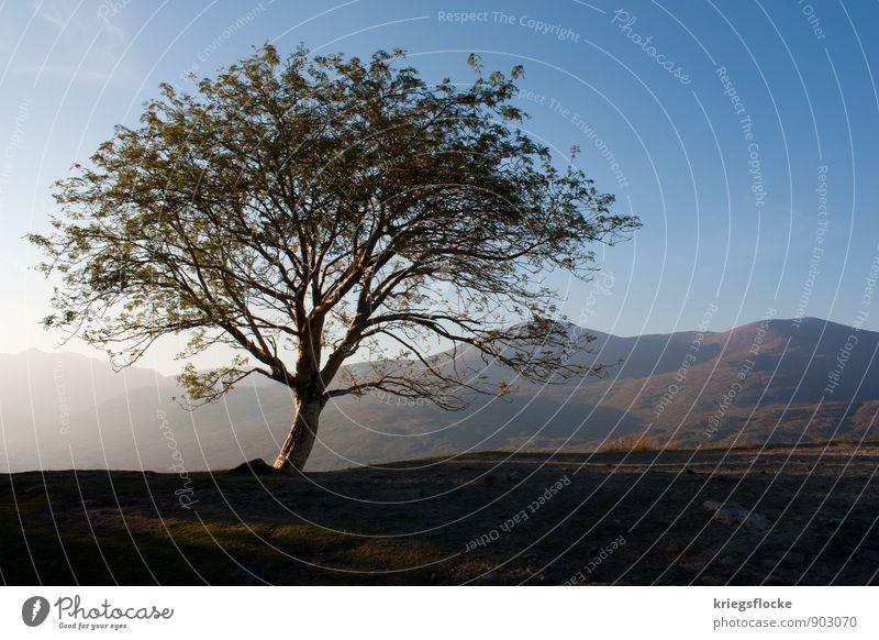 One Tree and Hills Freiheit Berge u. Gebirge wandern Natur Landschaft Pflanze Erde Himmel Sonne Sonnenlicht Wetter Schönes Wetter Baum Blatt Wiese Hügel Gipfel