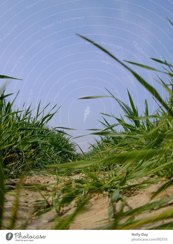 Mäuseautobahn Feld Spuren Halm Gras braun trocken Frühling Getreide Himmel blau Erde drüch Wenn Halme im Weg stehen Traktorspur