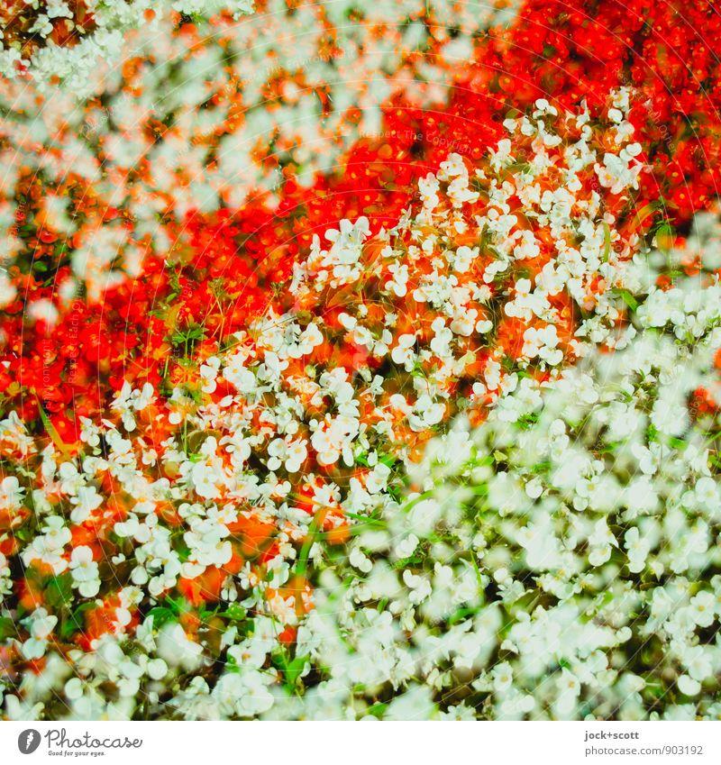 Geduld/ wieder querbeet Pflanze schön Farbe Sommer Blume Wärme natürlich Glück Park Wachstum Ordnung Dekoration & Verzierung Fröhlichkeit ästhetisch