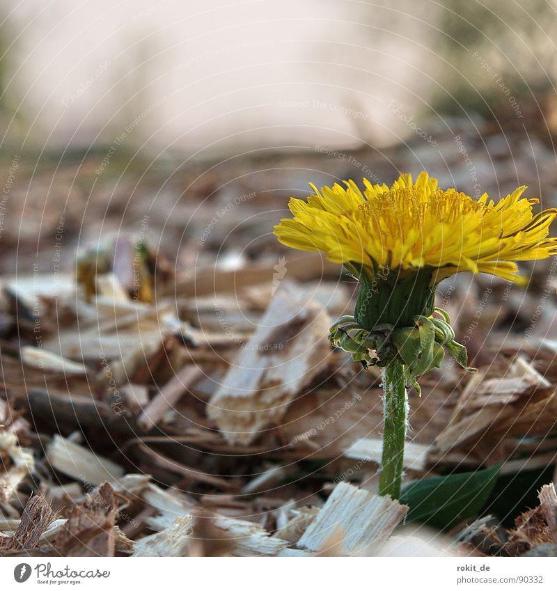 Ich bin durch! gelb grün zerkleinern Kompost Müll Biomasse verrotten Schnipsel Schnitzel Vertrauen löwenzahm durch kommen Einsamkeit schredder holzhack