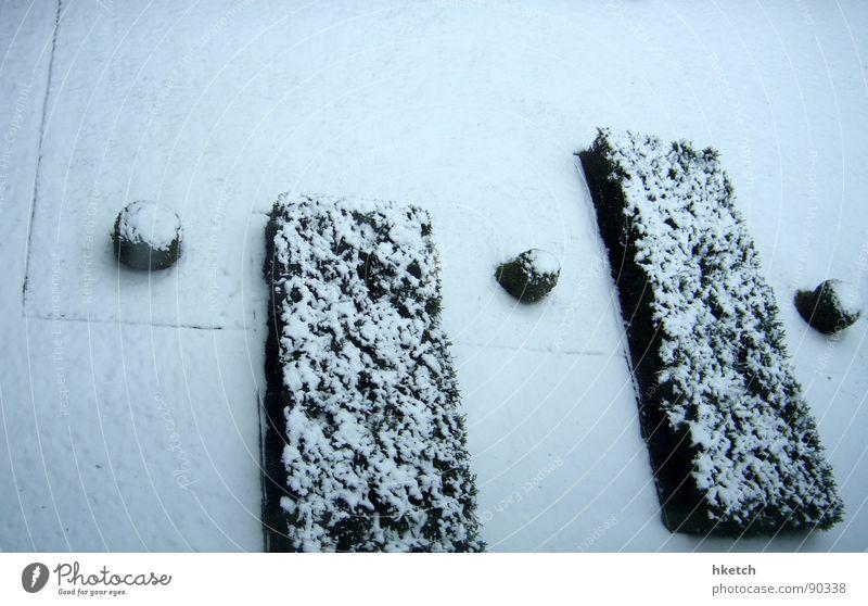 Ganz leicht gezuckert weiß Winter ruhig Einsamkeit kalt Schnee Garten Park Eis süß Sträucher Frost geheimnisvoll frieren Langeweile Zucker