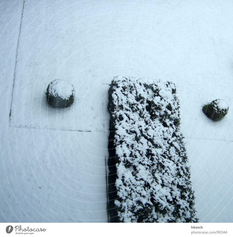 Im Garten von Frau Holle weiß Winter ruhig Einsamkeit kalt Schnee Park Eis süß Sträucher Frost geheimnisvoll frieren Langeweile Zucker