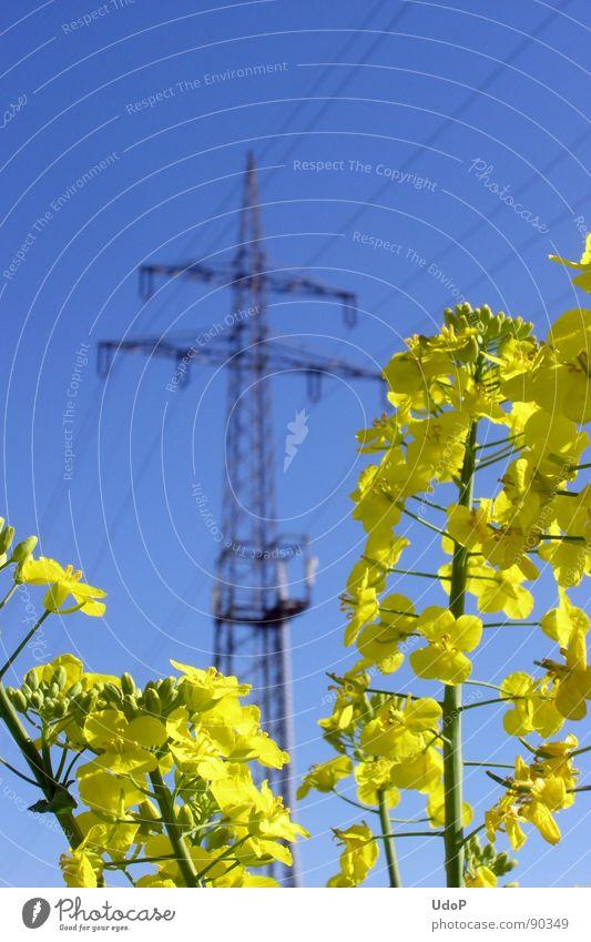 Energiewirtschaft Natur Himmel blau gelb Blüte Frühling Industrie Energiewirtschaft Elektrizität Strommast Raps Rapsöl
