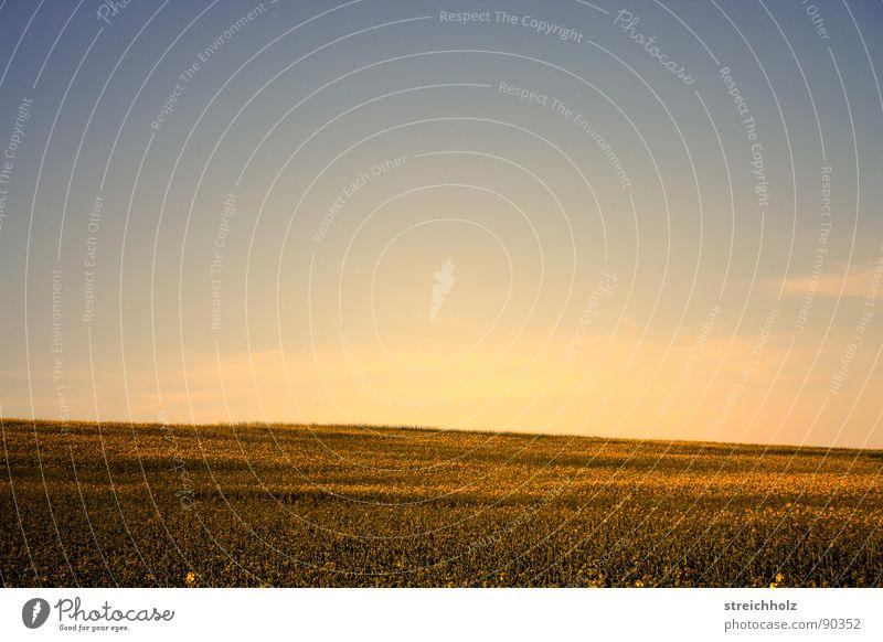 Himmelsfeld Himmel weiß gelb Wiese Freiheit Glück Feld Zufriedenheit gold Perspektive Hoffnung Landwirtschaft Bauernhof Paradies Kornfeld Samen