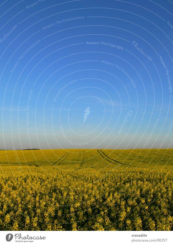 raps #13 Himmel gelb Frühling Feld Streifen Stengel Blühend Landwirtschaft Schönes Wetter ökologisch Bioprodukte Produktion Raps Klimawandel Traktor