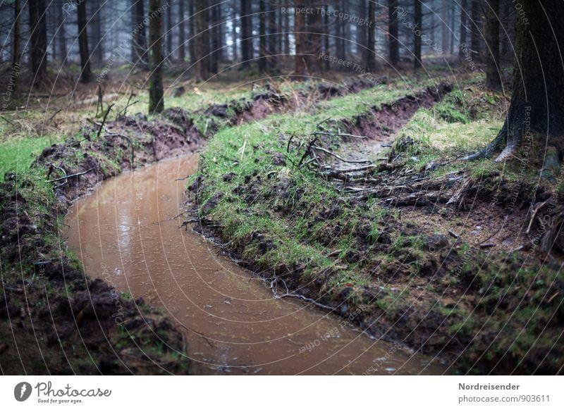Die Kurve gekriegt.... Natur Wasser Baum Wald Umwelt Wege & Pfade außergewöhnlich Wetter Regen Erde dreckig Klima nass bedrohlich Abenteuer Hoffnung