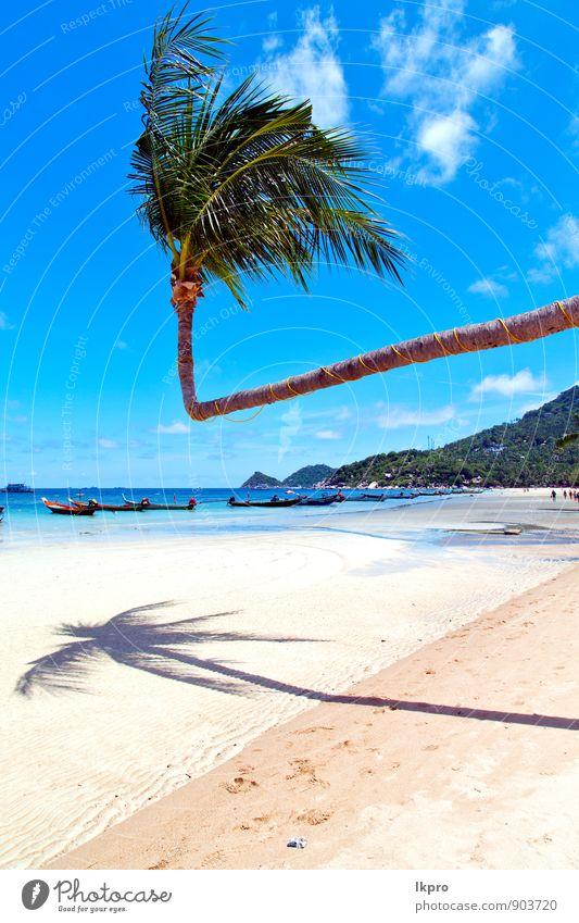 Himmel Natur Ferien & Urlaub & Reisen Pflanze schön Sommer Baum Erholung Meer Landschaft Blatt ruhig Wolken Strand Küste Freiheit
