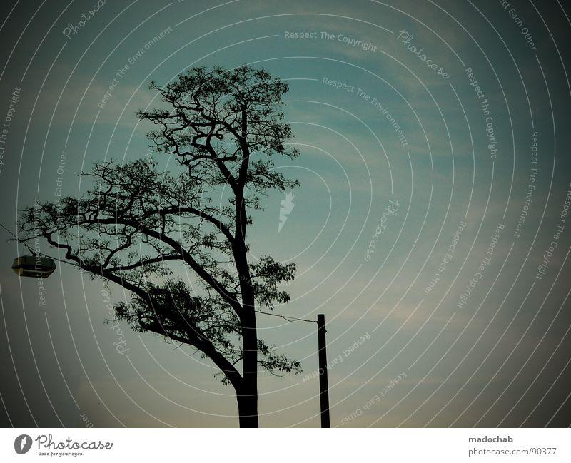 STRERATHsche MONOKULTUR Baum Lampe Laterne Silhouette Gegenlicht Abend Himmel Horizont tree Zweig brenches silhouettes evening Idylle kitschwolken clouds sky