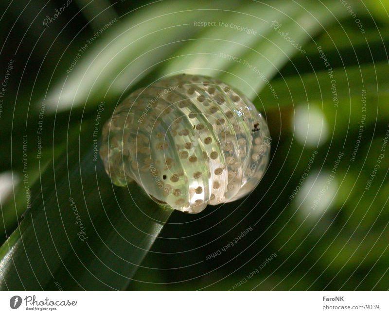 Laich Froschlaich Ei