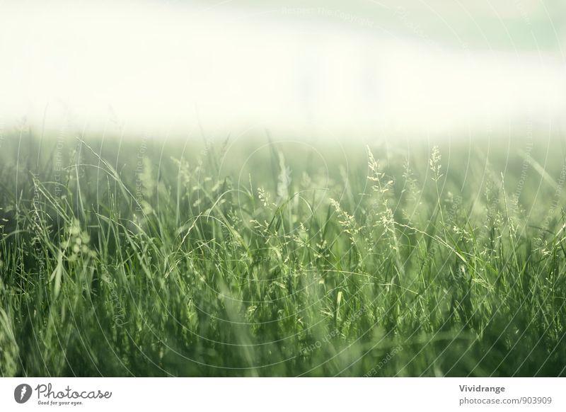 Grünes Feld Leben Erholung Sommer Garten Natur Landschaft Frühling Nebel Blume Gras Park Wiese weich grün weiß Romantik Nachmittag schließen London