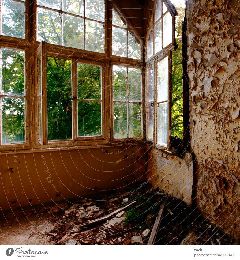durchlüften alt Pflanze Baum Haus dunkel Fenster Wand Mauer Garten braun Fassade Wohnung Raum Häusliches Leben kaputt Vergänglichkeit