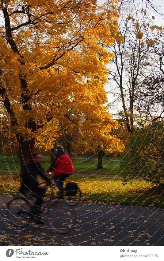 Herbstbeginn Mensch Baum Blatt gelb Wege & Pfade orange gold Geschwindigkeit Verfall reich Hannover Farblosigkeit gegeneinander