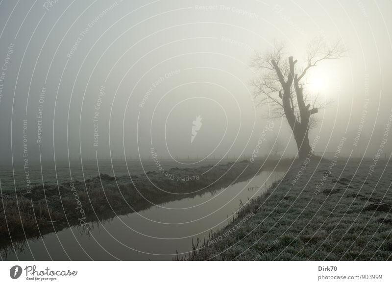 Wohlfühloase | Ruhe finden am Wintermorgen Natur Pflanze weiß Baum Einsamkeit Landschaft ruhig Wolken Ferne schwarz kalt Umwelt Wiese Gras grau