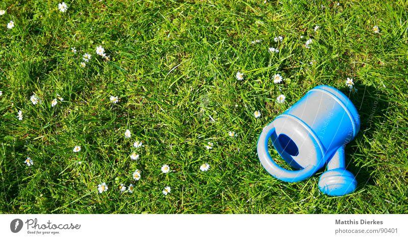 GIEßKANNE Gießkanne Sommer Gänseblümchen Wiese Ferien & Urlaub & Reisen Feierabend Spielen Freizeit & Hobby schön ruhig Freude Garten blau Rasen Erholung Wasser