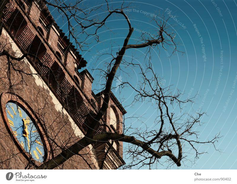 Halb Zwölf Himmel alt blau Baum Sommer schwarz Leben Herbst Mauer Stein Zeit gold hoch Uhr Vergänglichkeit Ziffern & Zahlen