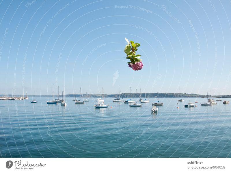 In Gedanken gedenken Wolkenloser Himmel Schönes Wetter Küste Meer Schifffahrt Fischerboot Sportboot Jacht Motorboot Segelboot Hafen Jachthafen blau Mitgefühl