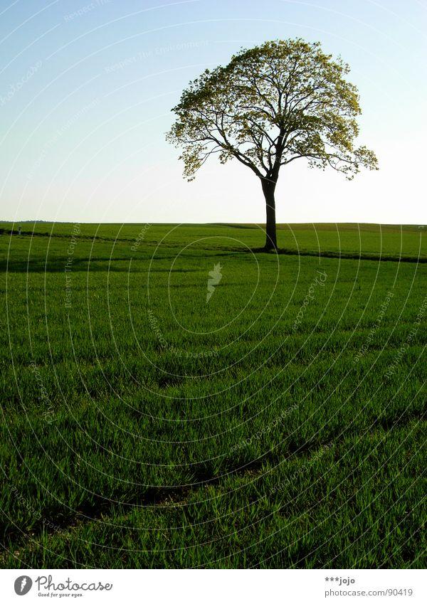 real tree Baum Pampa Frühling Blatt Feld springen grün saftig Wachstum stark Weizen schön Landschaft field landscape Wärme