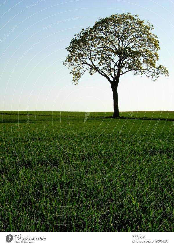 fake plastic tree Baum Pampa Frühling Blatt Feld springen grün saftig Wachstum stark Weizen schön Landschaft field landscape Wärme