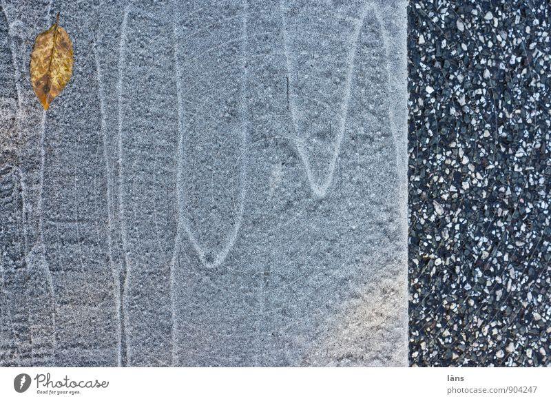 Kursverlauf Herbst Blatt Verkehr Verkehrswege Straße Wege & Pfade Fahrbahnmarkierung liegen Wandel & Veränderung Außenaufnahme Menschenleer Textfreiraum unten