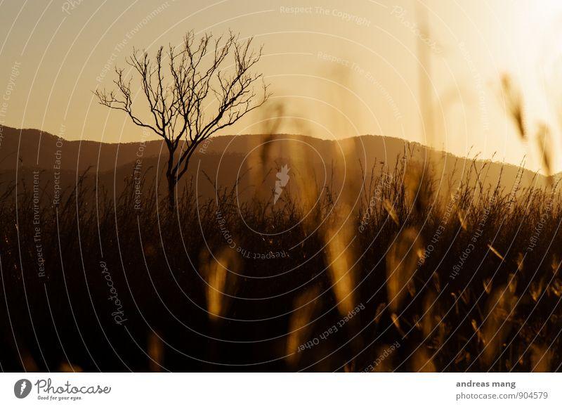 Toter Baum Natur Einsamkeit Ferne Umwelt Berge u. Gebirge Gras Tod Freiheit Feld Wachstum Klima ästhetisch Warmherzigkeit Wandel & Veränderung Vergänglichkeit