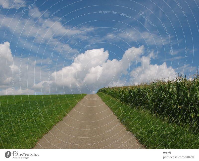 Der Weg geht weiter Wolken Horizont Hoffnung Zukunft loslassen Denken Gedanke Außenaufnahme Wiese Maisfeld Himmel Sommer Vertrauen Wege & Pfade Landschaft Ziel