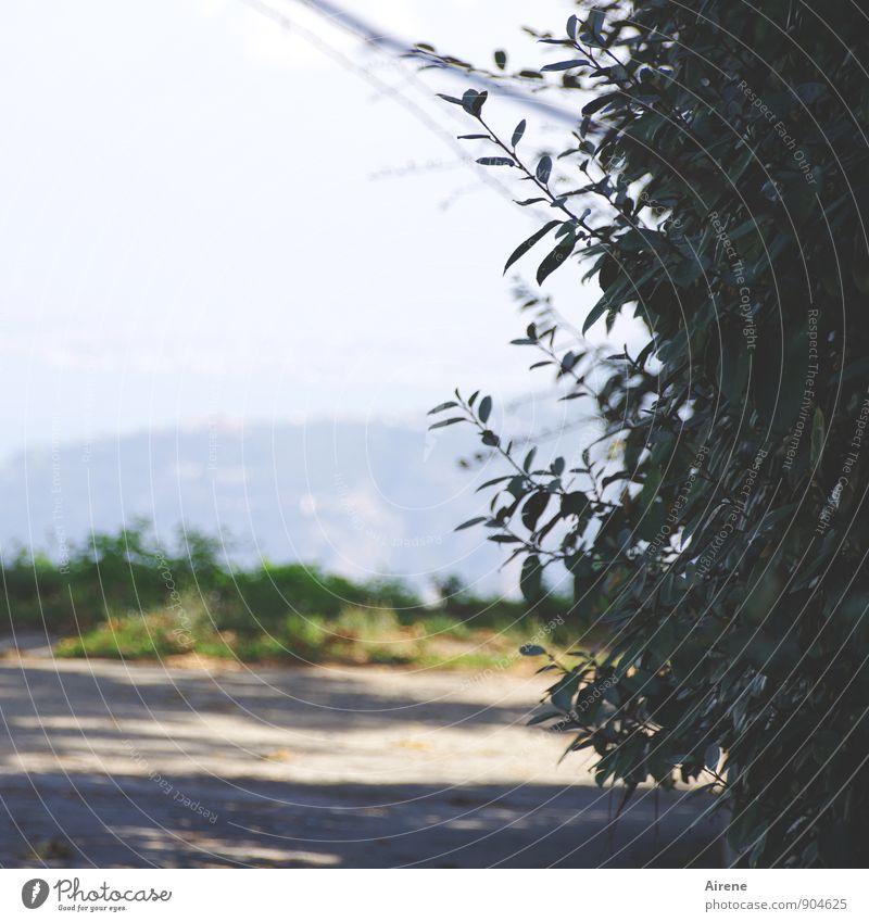 an der Wegbiegung Pflanze blau grün Wege & Pfade grau oben Park wandern warten Aussicht hoch Hügel unklar Hecke unsicher Liguster