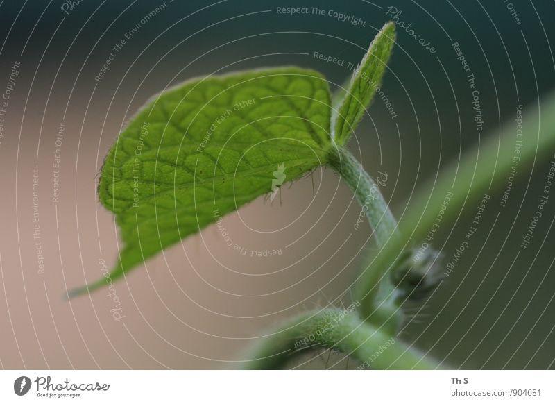 Blatt Natur Pflanze schön grün Sommer ruhig Herbst natürlich Freiheit elegant Idylle authentisch ästhetisch einfach Blühend