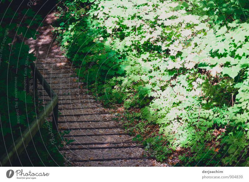 Licht und Schatten Natur grün Sommer Erholung Blatt ruhig Wald Bewegung grau Stein gehen Zufriedenheit Treppe ästhetisch laufen einzigartig