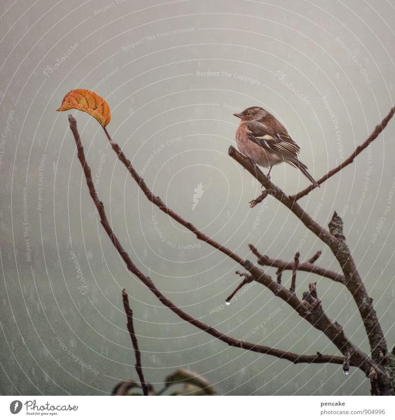 das letzte blatt Natur Baum Einsamkeit Blatt Tier Winter Leben Herbst Schnee natürlich Vogel Schneefall orange Regen Nebel authentisch