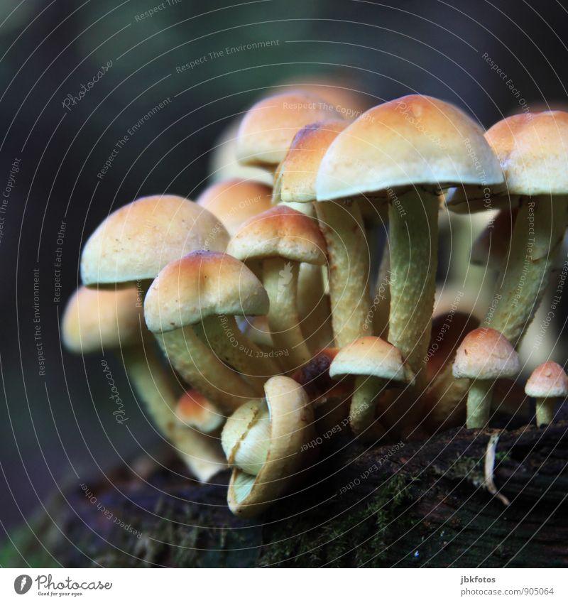 Wohlfühloase | Gruppenfeeling Umwelt Natur Pflanze Tapferkeit Pilz mehrere viele Waldboden Waldlichtung Lichterscheinung Strahlung strahlend Beleuchtung schön