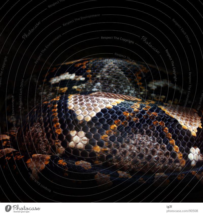 schlangenmosaik schön schwarz Tier Leben dunkel Haut Hintergrundbild gefährlich bedrohlich Tierhaut Zoo Teile u. Stücke Fliesen u. Kacheln Schmuck Zaun edel