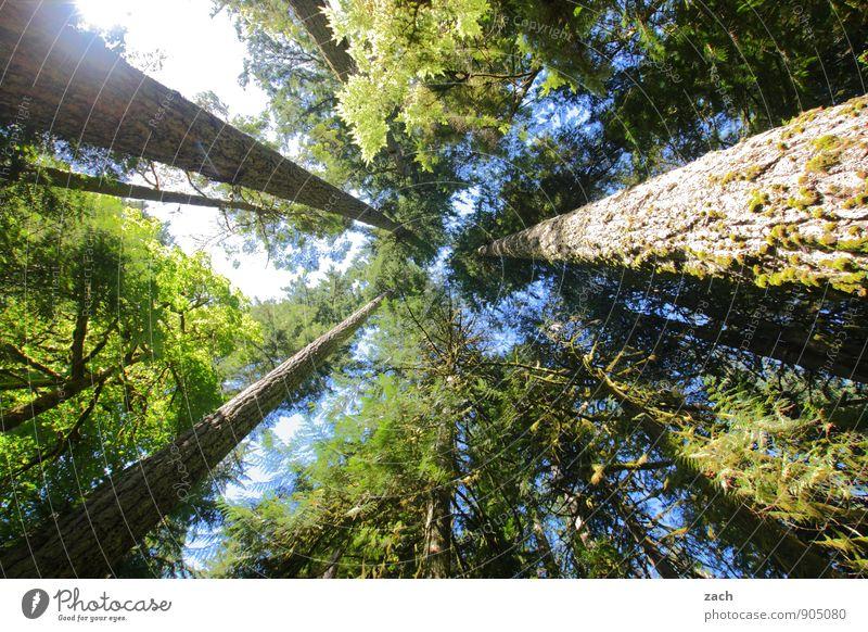 Entfaltungsmöglichkeiten | Bio-Skyscraper Himmel Natur Pflanze grün Sommer Baum Ferne Wald Holz Park Wachstum groß Insel Schönes Wetter Urelemente
