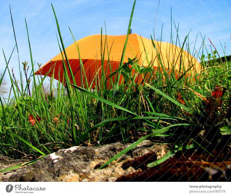 Unbekanntes Flugobjekt Cloppenburg Regenschirm Sonnenschirm Unwetter Wolken Gras Halm Wiese Sommer Feld grün Frühling Blumenwiese Umwelt sommerlich Pflanze