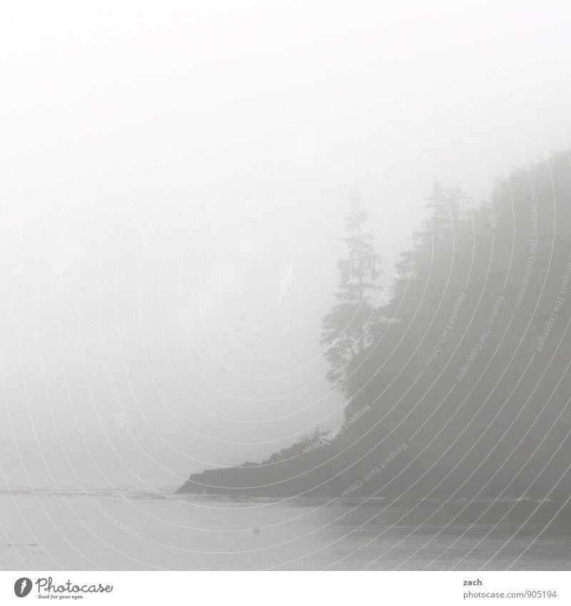 Küstennebel Natur Pflanze Wasser Baum Meer Landschaft Ferne dunkel Wald kalt Berge u. Gebirge Herbst grau Felsen Wetter