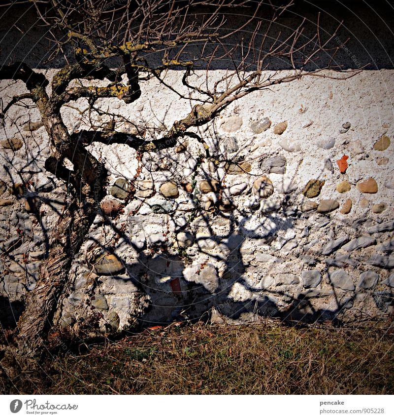 !trash! | schattendasein Natur Baum Winter Tod Mauer authentisch Armut Zeichen trashig