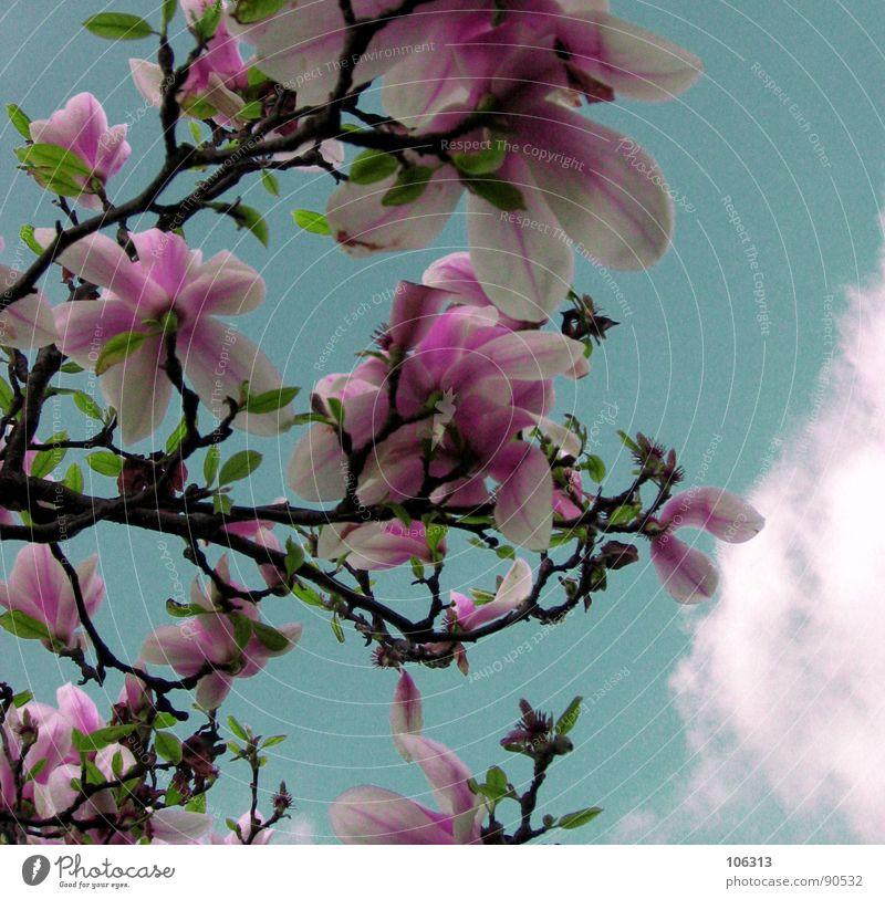BLÜHT UNS EIN NUKLEARER FRÜHLING? Pflanze Geäst Wachstum Frühling springen austreiben sprießen Blüte Park Himmel Wolken grün rot rosa weiß organisch Lebewesen