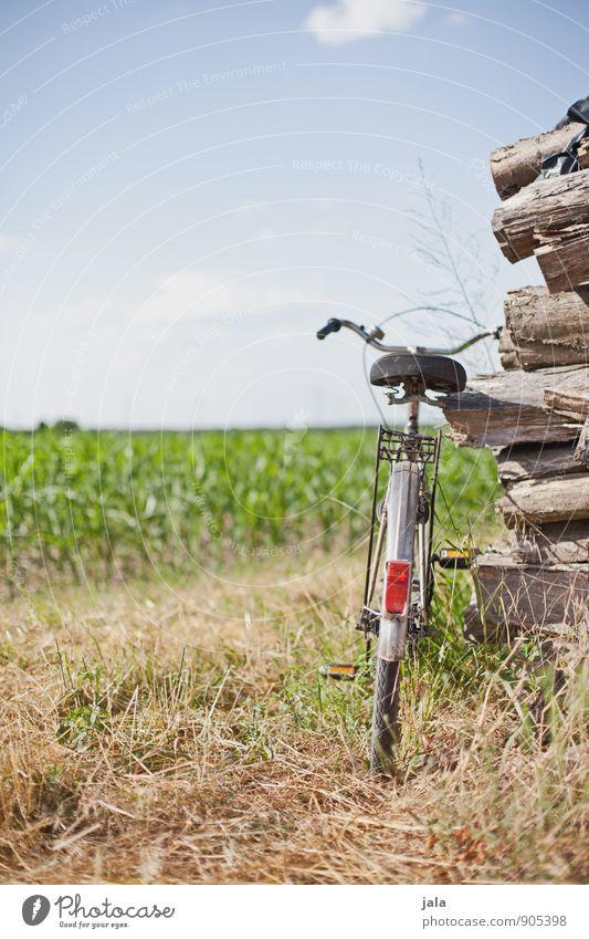 radel Fahrrad Natur Landschaft Pflanze Himmel Sommer Schönes Wetter Gras Nutzpflanze Feld Freundlichkeit positiv Farbfoto Außenaufnahme Menschenleer