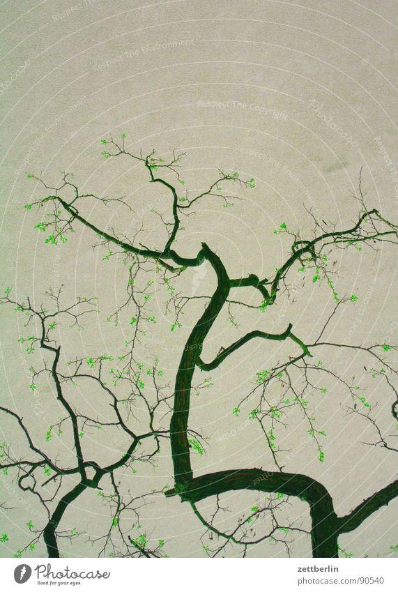 Robinie Baum Pflanze Blüte Park Klima Wachstum Ast Baumstamm Zweig Japan Blütenknospen Klimawandel verzweigt Blume Schmetterlingsblütler Schöneberg