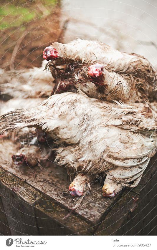 kopflos Fleisch Geflügel Ernährung Bioprodukte Tier Nutztier Totes Tier Hühnervögel natürlich Schlachtung Feder Farbfoto Außenaufnahme Menschenleer Tag